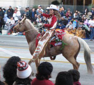 Horses11