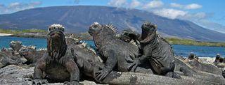 Galapagos-reptiles