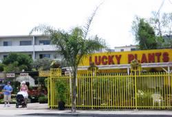 Lucky_plants